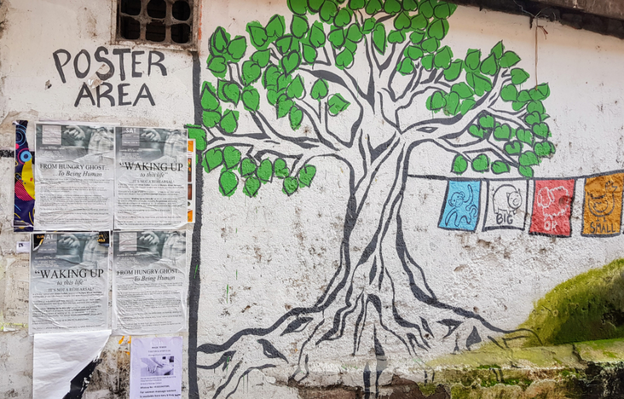 Painting of tree with roots on whitewashed wall (in Dharamsala, India)